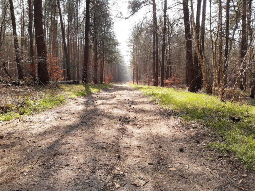 Runzelfuesschen Waldbesuch mit Kindern