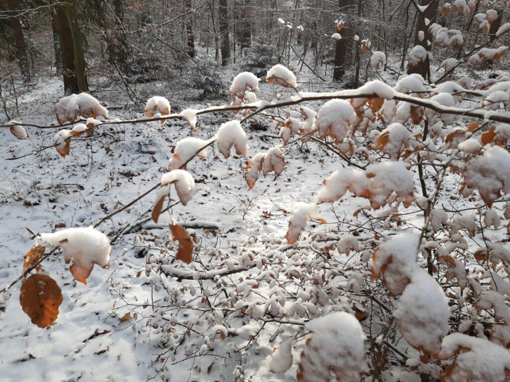 Winter in Berlin Runzelfuesschen